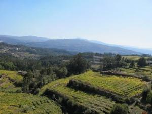 Views of Vineyards from Villar
