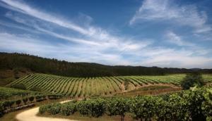 The Ruta do Viño Rias Baixas
