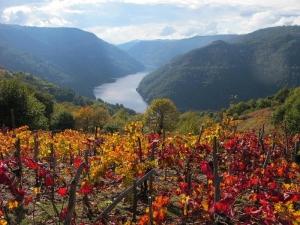 Autumn colours, River Sil canyon, Ribeira Sacra
