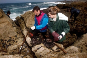Fishing for Goose Barnacles, Oia