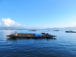 Mussel Beds, Pontevedra Estuary
