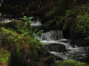 Water & Stones, Barrantes