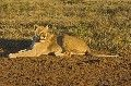 Big 7 at Addo National Park, Eastern Cape, South Africa