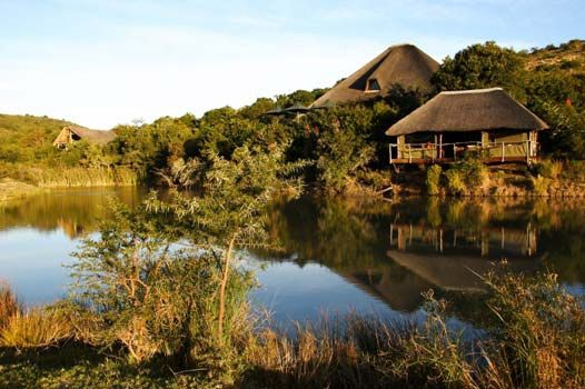 Luxury eco-safari at Shamwari Game Reserve, Eastern Cape