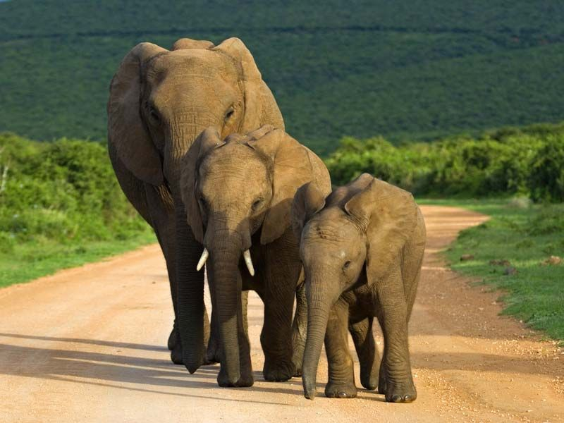 Spotting Elephants at Addo Elephant Park, Port Elizabeth, Eastern Cape, South Africa
