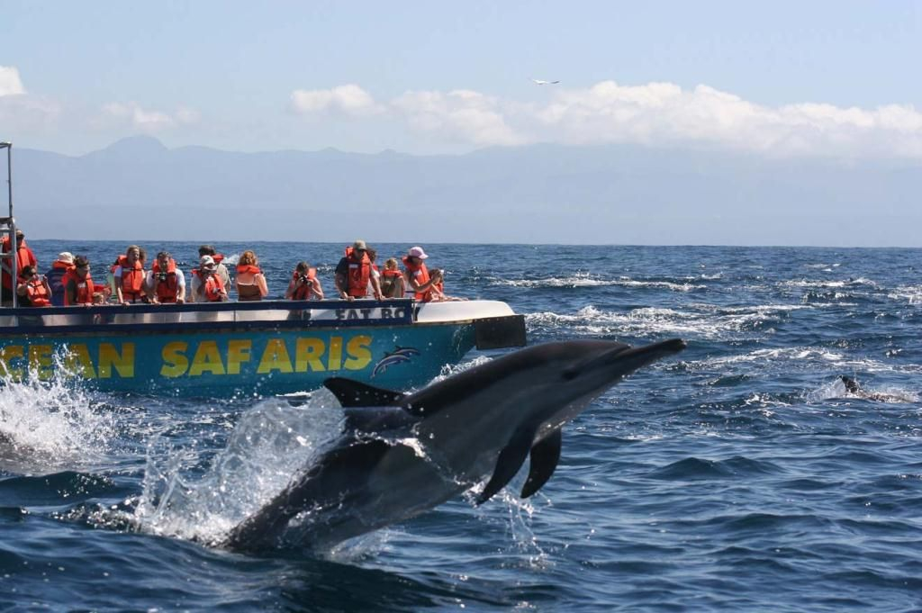 Whale and Dolphin Watching, Plettenberg Bay, Garden Route