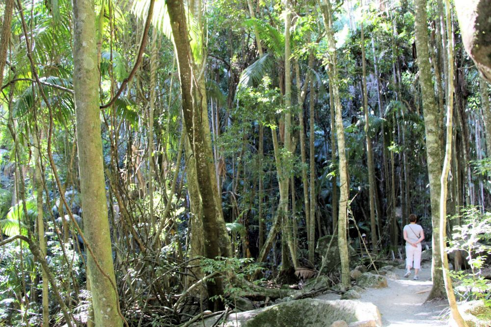 Mysteries of the Rainforest