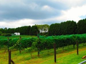 Cedar Creek Estate Winery - Mt Tamborine