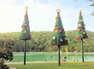 Christmas Trees at Tullebudgera Creek