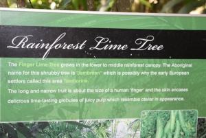 Our Rainforest
