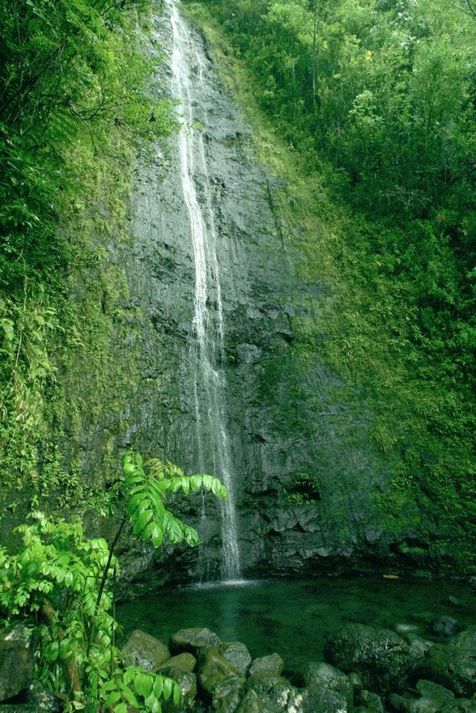"""The Treasures of Manoa Valley"""