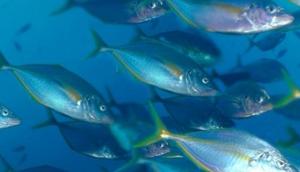 Big Blue Dive