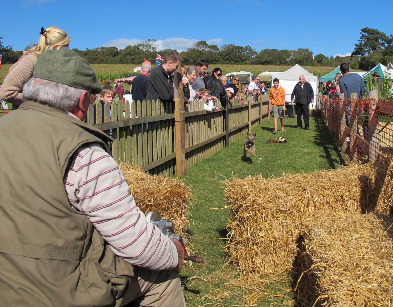 Terrier racing - Isle of Wight Sweetcorn Fayre