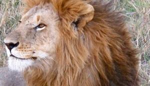 Natural World Mombasa Safaris