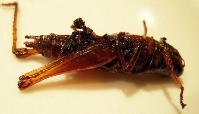 Jing Leed (Crickets)
