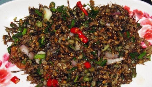 Mod Daeng (Red Ants)