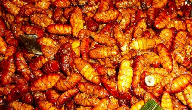 Nhon Mhai Silk Worms)