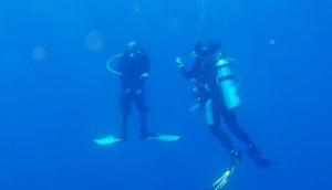 Dolphin Dive School