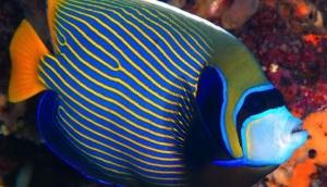 Vila Ombak Diving Academy