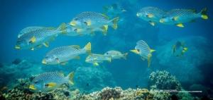 Gili Islands