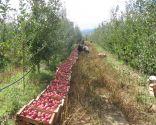 Western Macedonia