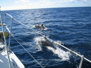 See dolphins on the way to Gibraltar