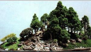 Museo del Bonsai