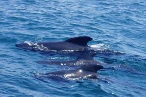 Dolphin spotting in Marbella