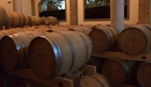 TrippyVines Wine Tours