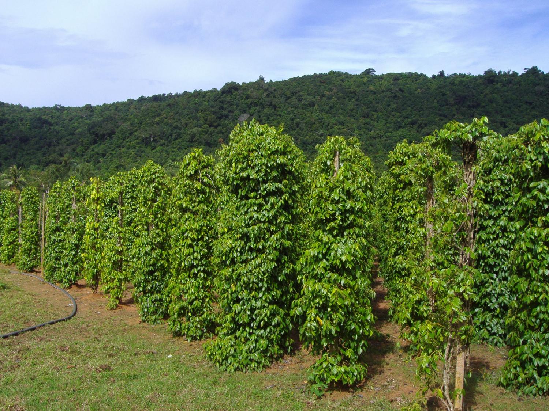 Pepper farms