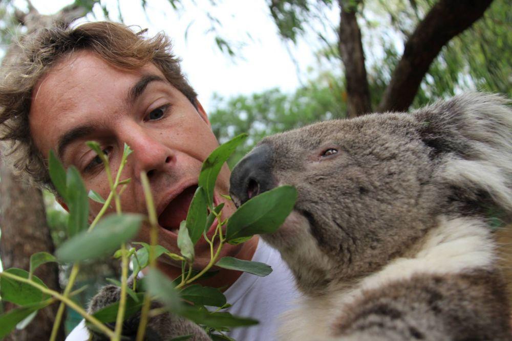 Lunch with Koalas, Moonlit Sanctuary