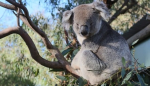 Best Wildlife Attractions in Melbourne