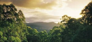 The Yarra Valley and Dandenong Ranges