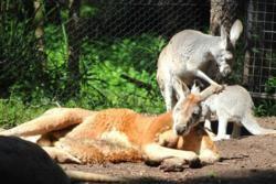 Yarra Valley: Wine, Wildlife and Wonderful Walks