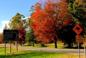 Autumn in Country Victoria