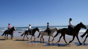 Beach horse riding - Mornington Peninsula