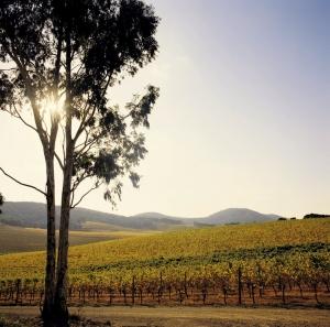 De Bortoli Winery : P Dunphy