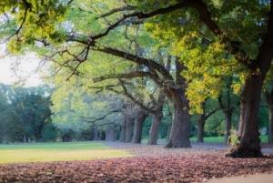 Fawkner Park in Melbourne
