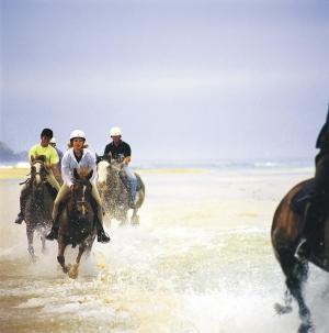 Gunnamatta Beach, Horse riding