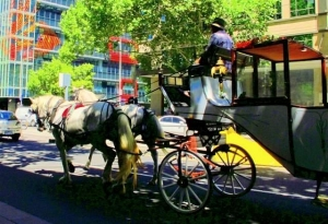 Horse and Carriage - a fun way to explore the city
