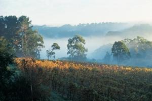 Main Ridge Winery