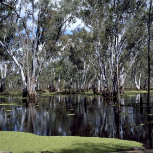 Murray River : K Stepnell