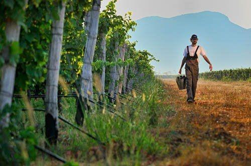 Plantaze Wine
