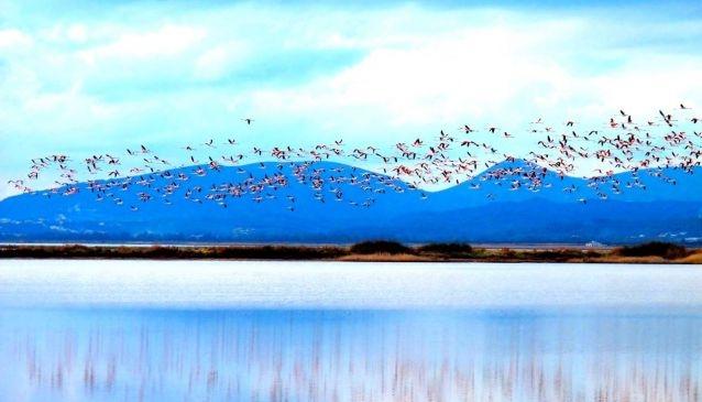 Flamingos Encounter at Ulcinj Salina