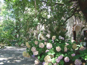 Garden in Hotel Dubrava Budva Montenegro