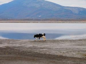 Usual Scenery in the Saline of Ulcinj