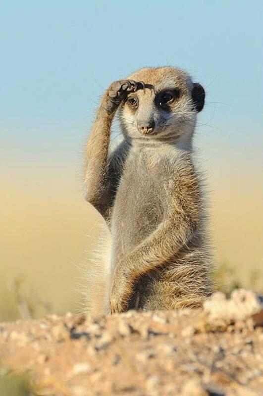 A salute to Namibia