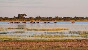 Intu Afrika Kalahari Suricate Tented Lodge