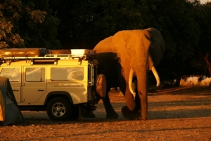 Camp visitor, Mondjila Safaris