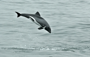 Catarman Dolphins